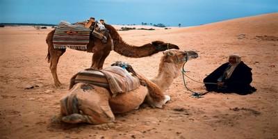 Zagora desert trips